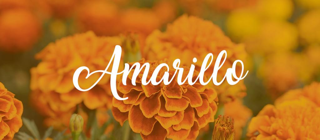 Free-Script-Fonts-Amarillo.