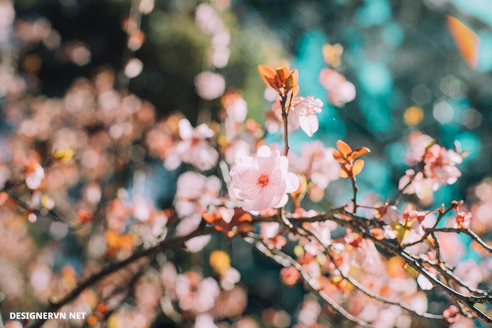 PRESET-flower.