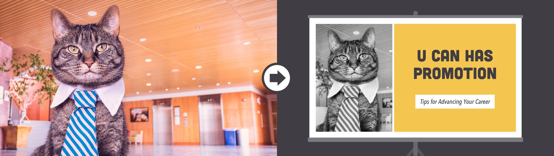 images_edit_bosscat.