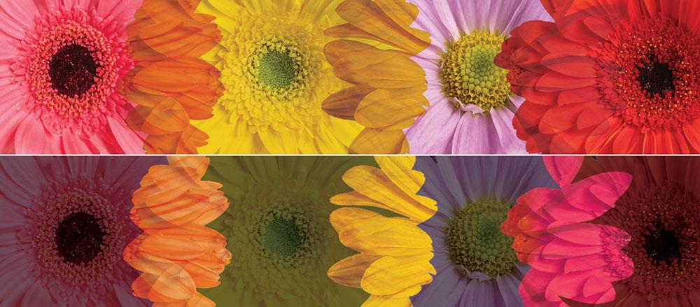 shutterstock-free-flower-images-blend-modes.