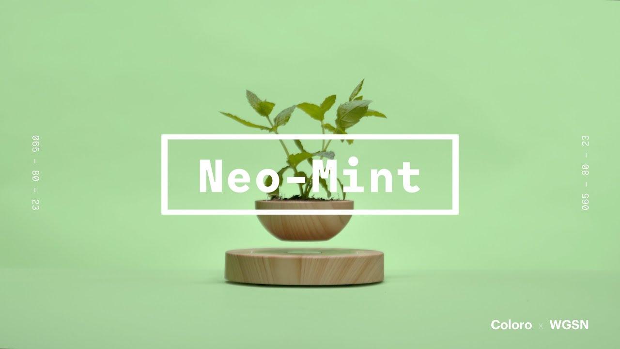 Neo-Mint.
