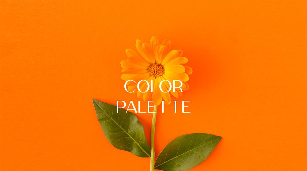 color-palette.